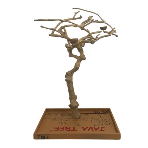 Java Wood Tree Boxed
