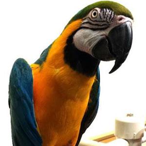 Love Your Bird: Big Bird the Talkative Macaw