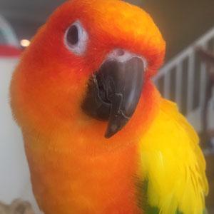 Love Your Bird: Bob the Calming Conure