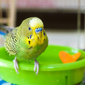 My First Bird: How Do I Care for My New Bird?