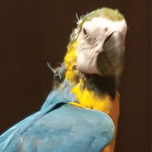 Love Your Bird: Paca the Feathered Sidekick