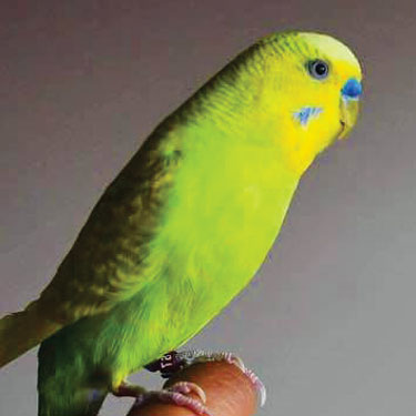 What's For Dinner: Best Bird Food & Snack Ideas