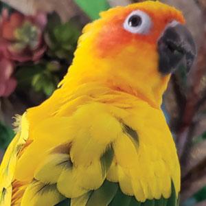 Love Your Bird: Pumpkin the Sun Conure