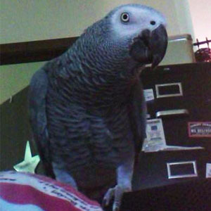 Love Your Bird: Rio the African Grey Meets His Soul Mate