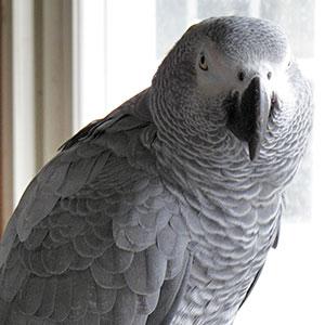 Love Your Bird: Salem the Sports Fanatic