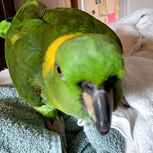 Love Your Bird: Wally's Big Surprise