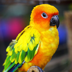 Ensuring Your Pet Bird Receives Adequate Sleep