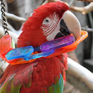 Bird Chewing