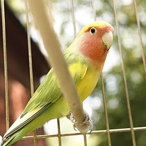 Full-Spectrum Lighting for Birds