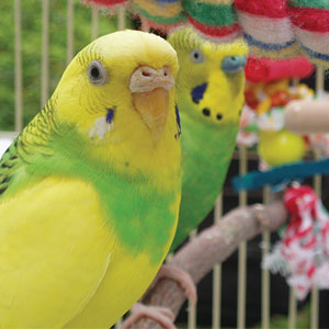 Finding the Right Place for your Bird's Cage