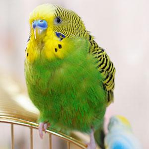 How to Bathe a Bird