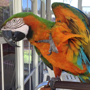 Love Your Bird: Maggie the Macaw
