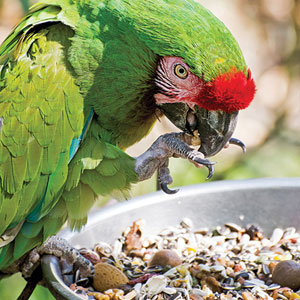 Pet Bird Nutrition