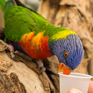 Why Lactobacillus is Important to Your Bird's Health
