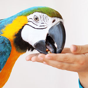 The Necessity of Treats for Your Pet Bird