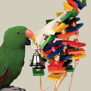 Why Birds Need Toys