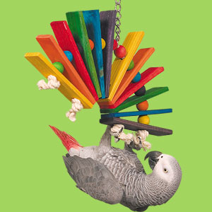 Bird Toy Types