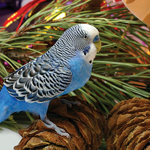 Holiday Safety Tips for Birds