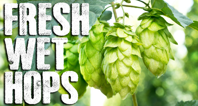 Fresh Wet Hops