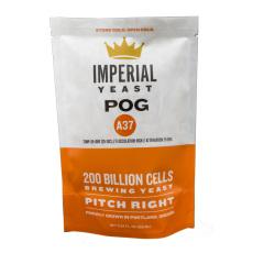 A37 Pog - Seasonal Strain - Imperial Organic Yeast
