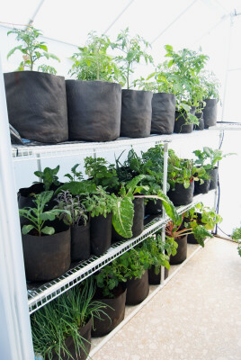 With a greenhouse you can garden and harvest throughout the year