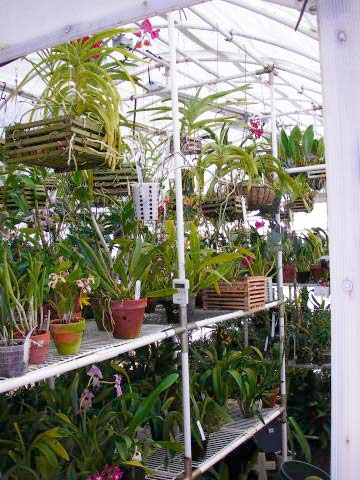 Solexx conservatory greenhouse has the ideal diffuse light for growing orchids