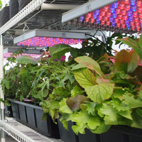 Products like the LED grow lights help to make the grow4it incredibly eco-friendly and inexpensive to operate.