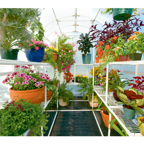 Harness the solar power of the sun with a greenhouse and grow all year