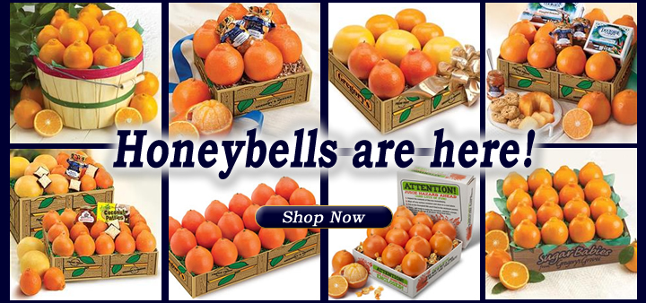 Honeybells are here