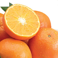 Temple Oranges (Royal Tangerines) - 4 trays Temple Oranges (Royal Tangerines)