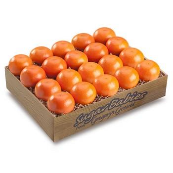 Sugar Baby Valencia Oranges