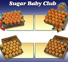 Sugar Baby Club Plan