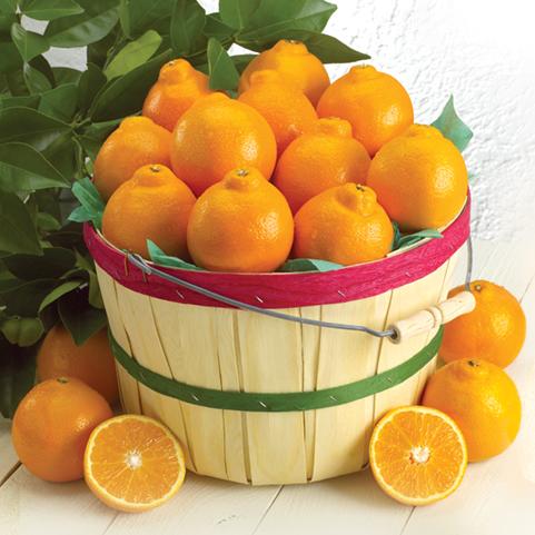 Honeybell Grove Basket