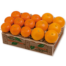 Navel & Tangerine Tango - 4 trays Navel and Tangerines