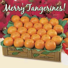 Merry Tangerines