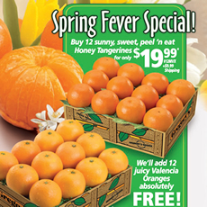 Spring Fever Special