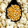 Pops the Lid Off Hybrid Popcorn Seed