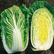 China Star Hybrid Cabbage