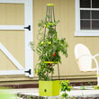 Self Watering Plant Tower