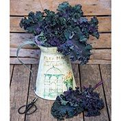 Gurney's<sup>®</sup> Winter Wonderland Mixed Kale
