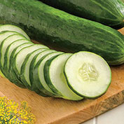 Sweet Success Hybrid Slicing Cucumber