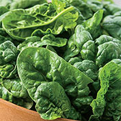 Bloomsdale Longstanding Spinach