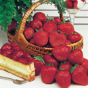 Gurney's<sup>®</sup> Whopper Strawberries
