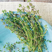 German Winter Thyme