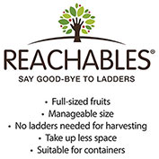 Honey Pearls&trade; Reachables<sup>&reg;</sup> Nectacot Tree