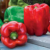 Gurney's<sup>®</sup> Giant II Hybrid Sweet Pepper