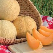 Gurney's<sup>&reg;</sup> Li'l Sweet Improved Hybrid Cantaloupe