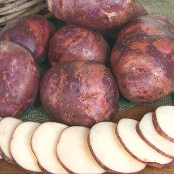 Purple Viking Potato</
