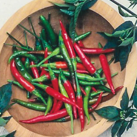 Chile de Arbol Hot Pepper