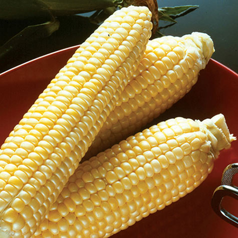 Incredible RM (se) Sweet Corn